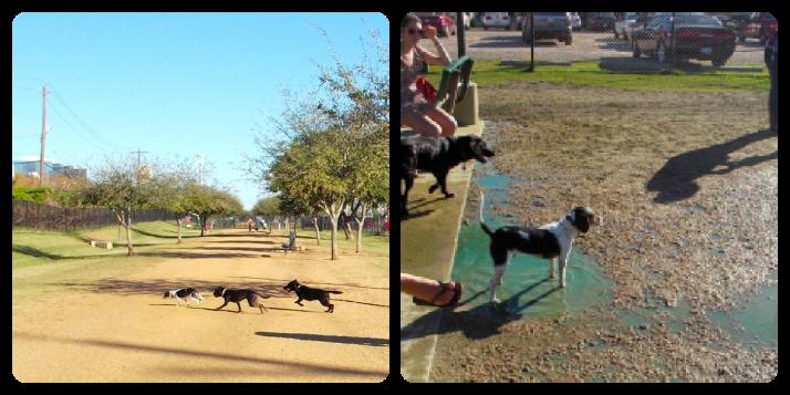 dogparkcollage2