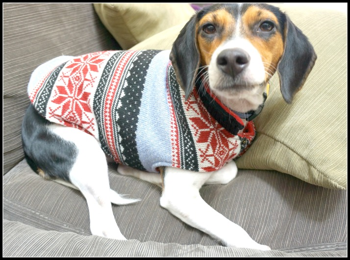 milosweater